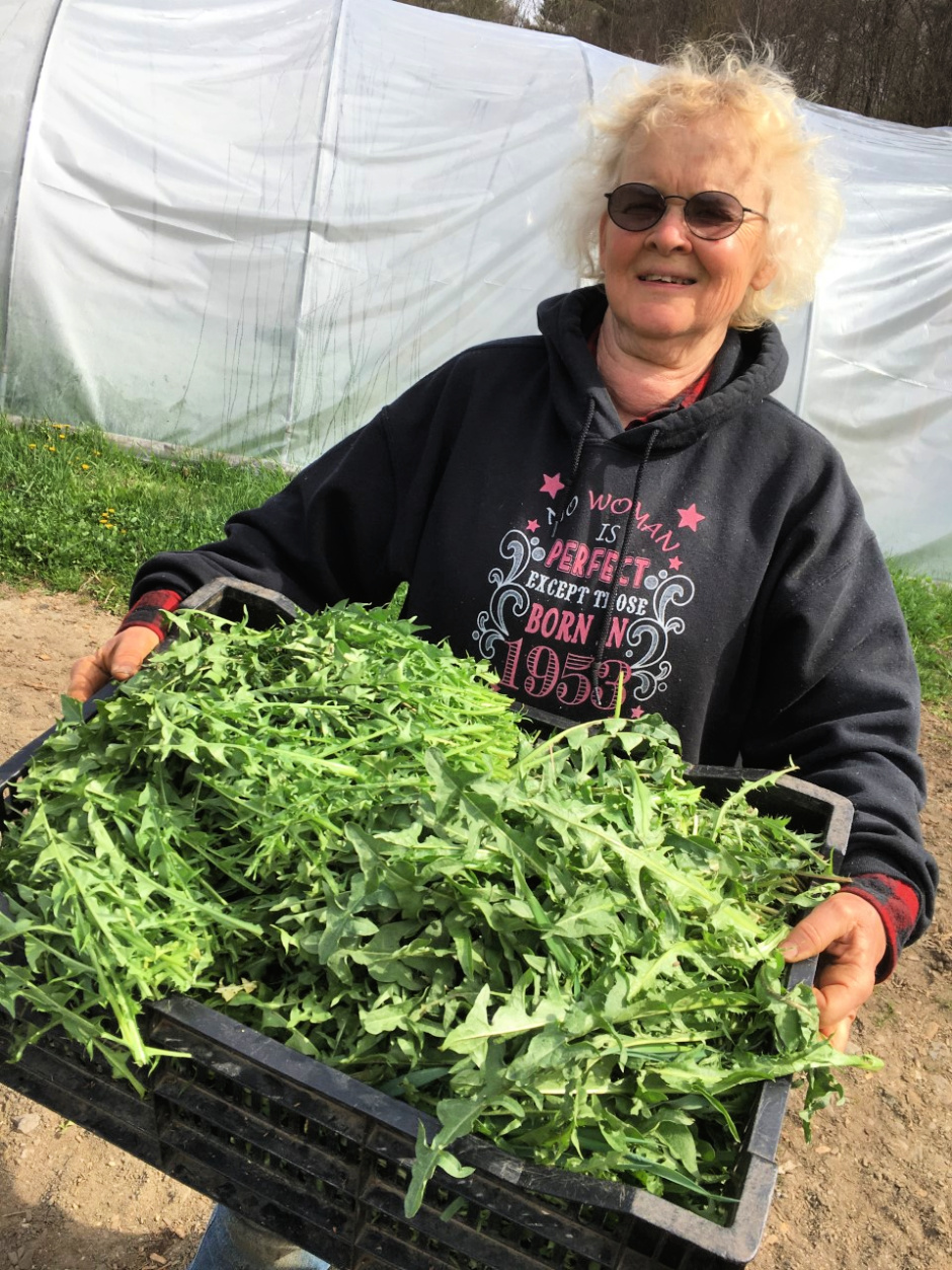 woman holding tray of dandelion greens