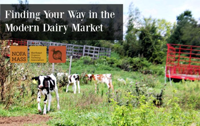 Calves on pasture