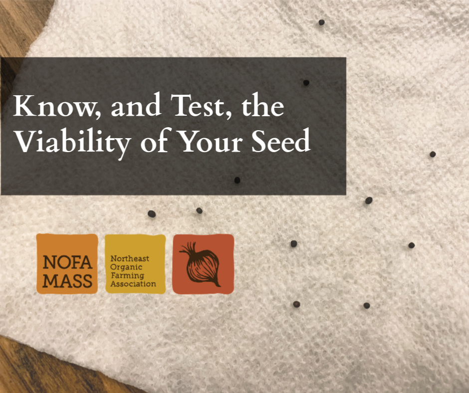 Seeds on a paper towel for viability test