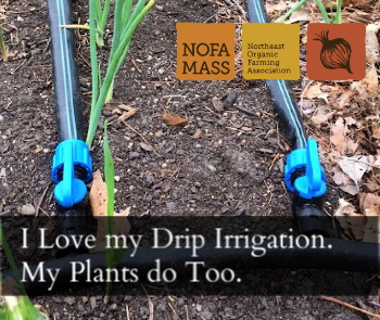 Drip irrigation in the garden