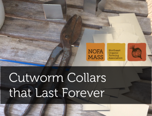 Winter Project: Cutworm Collars that Last Forever