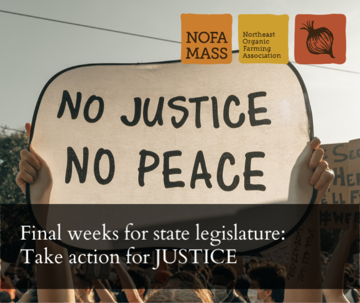 "Hands holding a sign that says ""no justice no peace"""