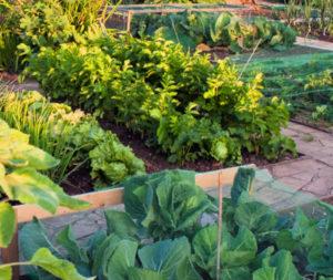 Raised bed community garden plot