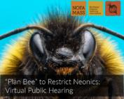 Closeup of bee face