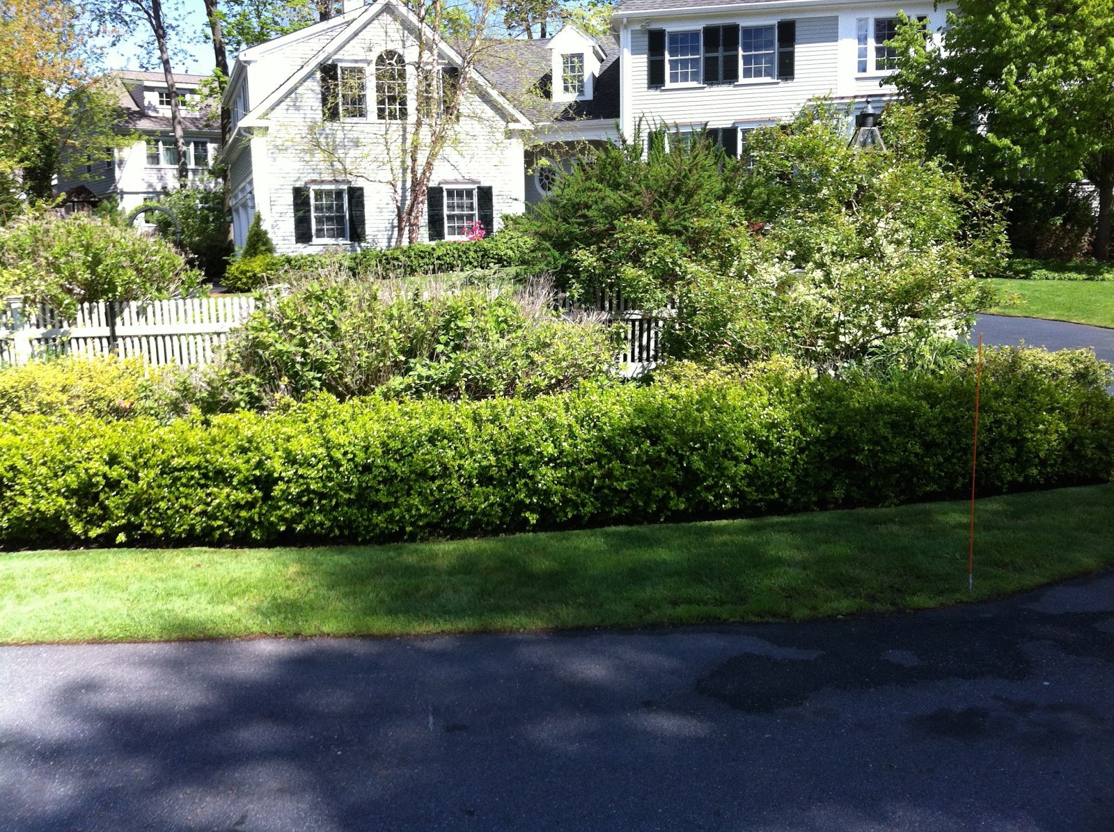 diverse perennial plants in a residential landscape