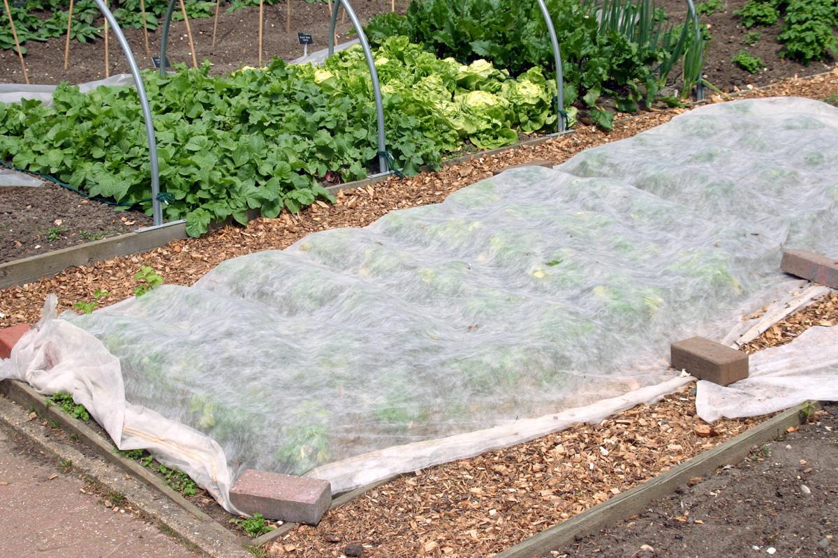 Garden with row cover