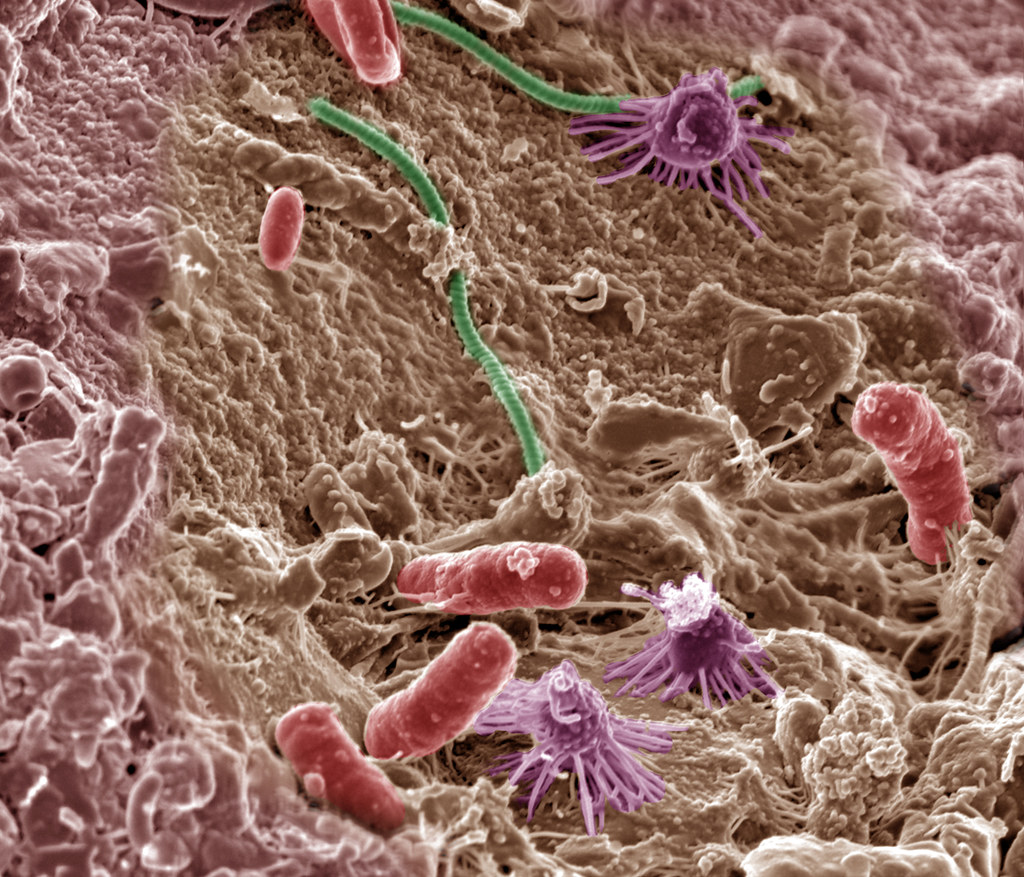 an image of soil microbes