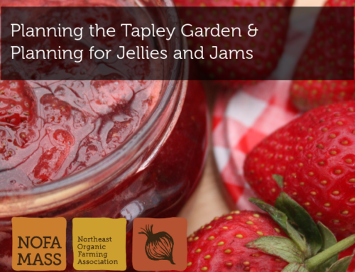 Planning the Tapley Garden and Planning for Jellies and Jams
