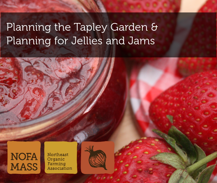 Strawberries and strawberry jelly