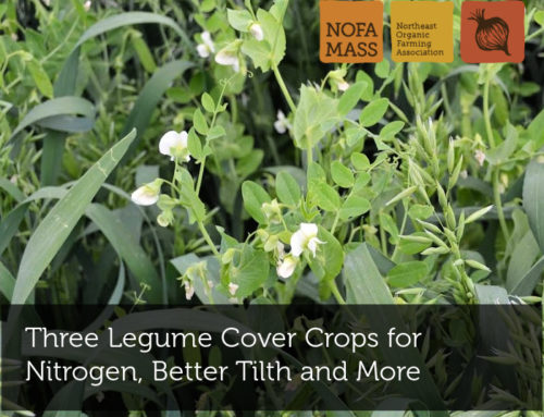 Three Legume Cover Crops for Nitrogen, Better Tilth and More