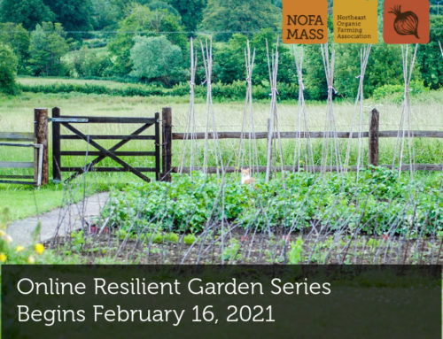 Online Resilient Garden Series Begins February 16, 2021