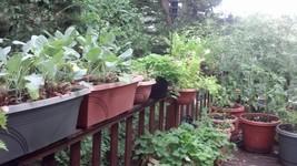 Plants on a porch