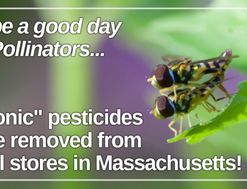 Victory for Pollinators! Retail stores to stop selling neonic pesticides in Massachusetts