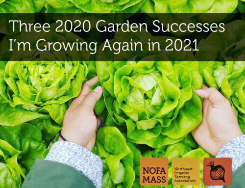 Three 2020 Garden Successes I'm Growing Again in 2021