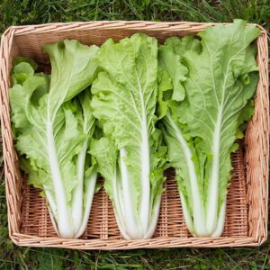 Three heads of lettuce in a basket