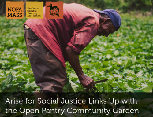Arise for Social Justice Links Up with the Open Pantry Community Garden