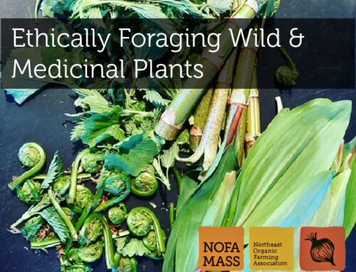 Ethically Foraging Wild & Medicinal Plants