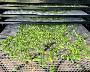 Chopped garlic scapes on a dehydrator tray