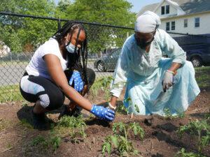 Two women planting seedlings