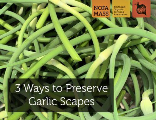 3 Ways to Preserve Garlic Scapes