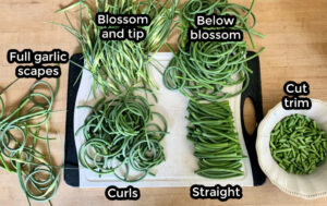 Sections of scapes sorted by size and shape