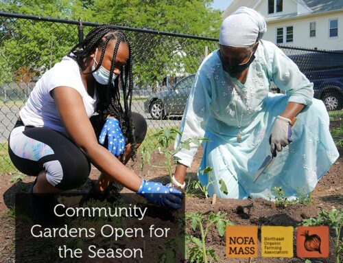 NOFA/Mass Food Access Project Community Gardens Open for the Season