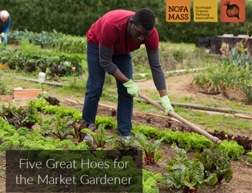 Five Great Hoes for the Market Gardener