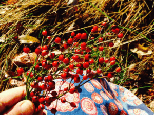 Red rose hips on small branches