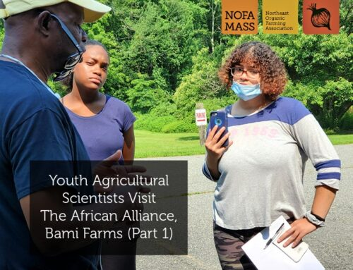 Youth Agricultural Scientists Visit The African Alliance, Bami Farms (Part 1)