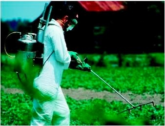 spraying food with poison