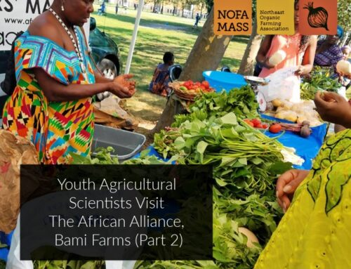Youth Agricultural Scientists Visit The African Alliance, Bami Farms (Part 2)