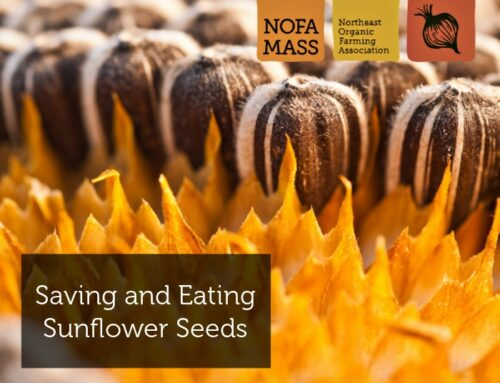 Saving and Eating Sunflower Seeds