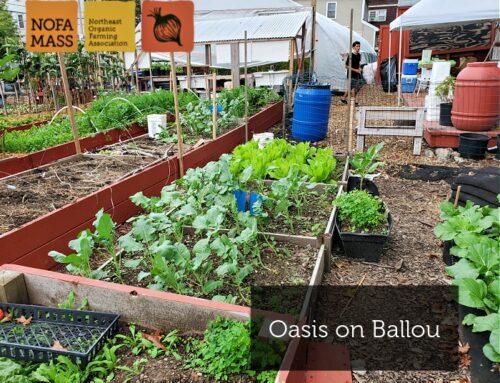 Oasis on Ballou