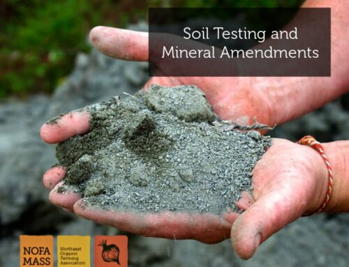 Soil Testing and Mineral Amendments